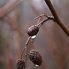 Winter rain by Jean Knowles