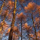 Trees at Beamish Woods by Great North Views