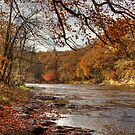 Autumn On The River Wear by Great North Views