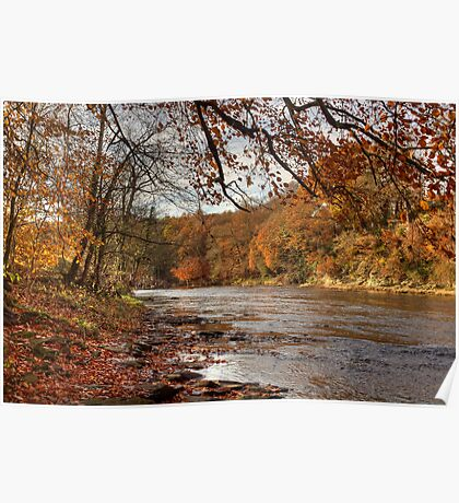 Autumn On The River Wear Poster