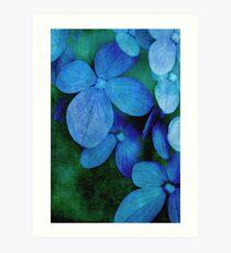 Hydrangea Blues Art Print