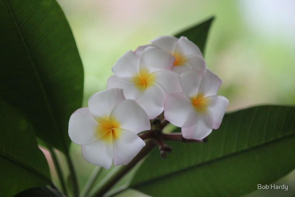 Plumeria Cascade by Bob Hardy