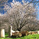 Woodpile in the Almond Orchard by Stephen  Shelley