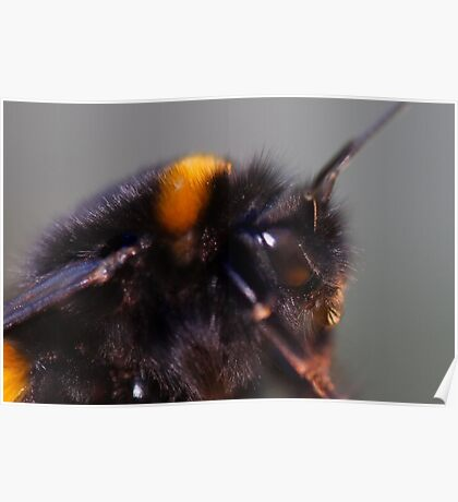 Not by the hair on my chinny ,chin,chin said this bumblebee Poster