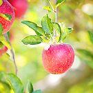 Apple by Megan Vaughan