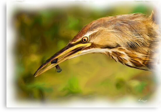 Bittern and Blackfish by Paul Wolf