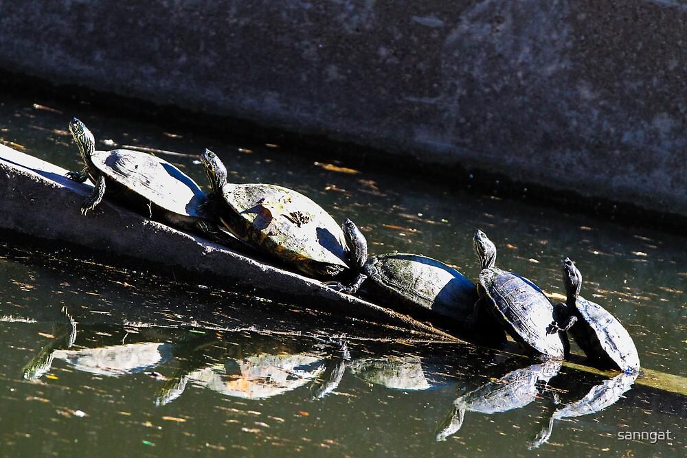 turtles by sanngat