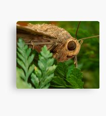 Black Witch Profile Canvas Print