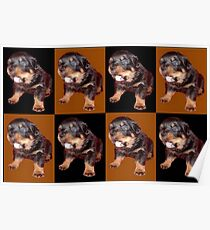 Rottweiler Puppy Isolated On Black and Tan Tile Pattern Poster