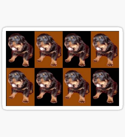 Rottweiler Puppy Isolated On Black and Tan Tile Pattern Sticker