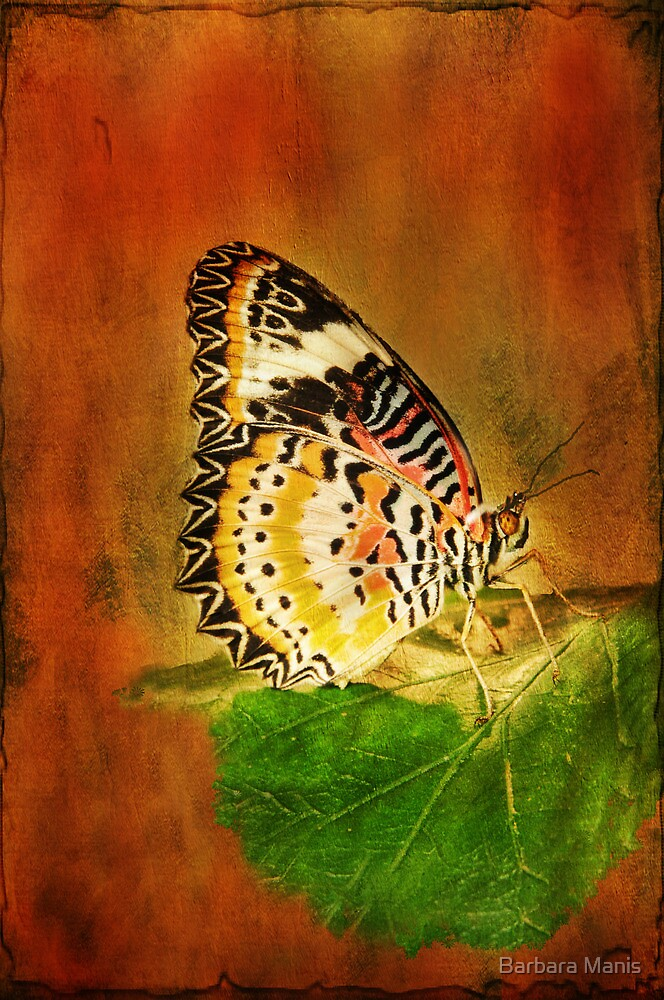 Beautiful Butterfly by Barbara Manis