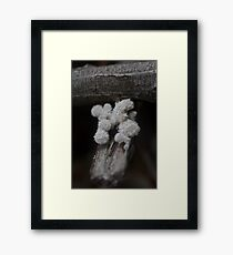 Furry Fungus Framed Print
