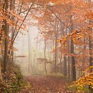 Mystic Woods by Anne Gilbert
