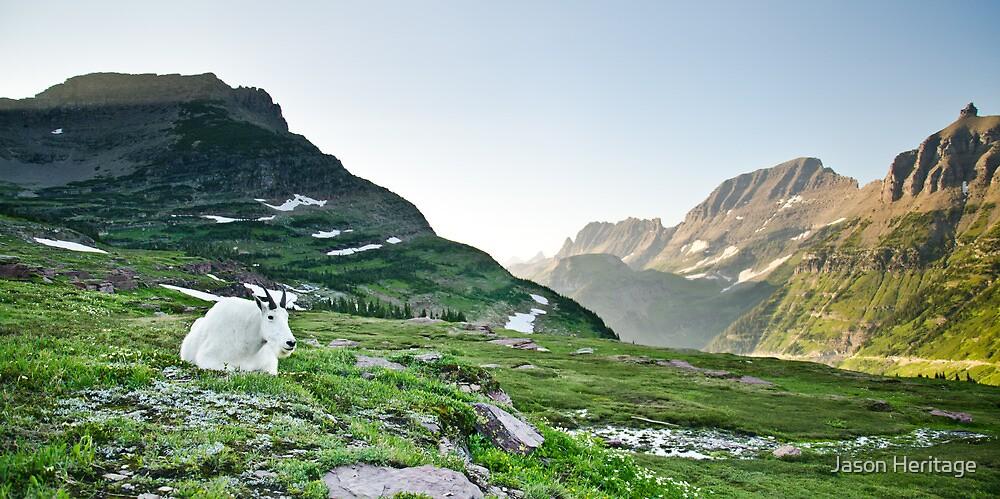 Mountain Goat at Logan Pass - Glacier National Park, Montana by Jason Heritage