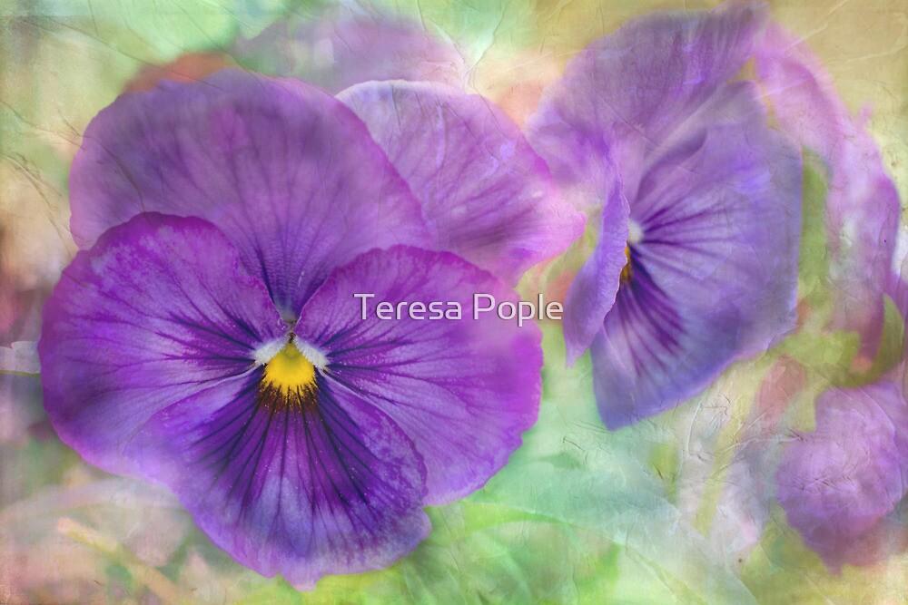 plainly pansy by Teresa Pople