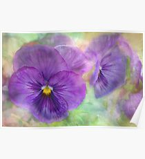 plainly pansy Poster