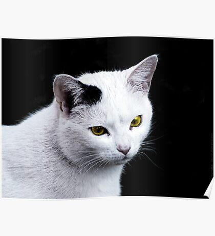 Cat Portrait VRS2 Poster