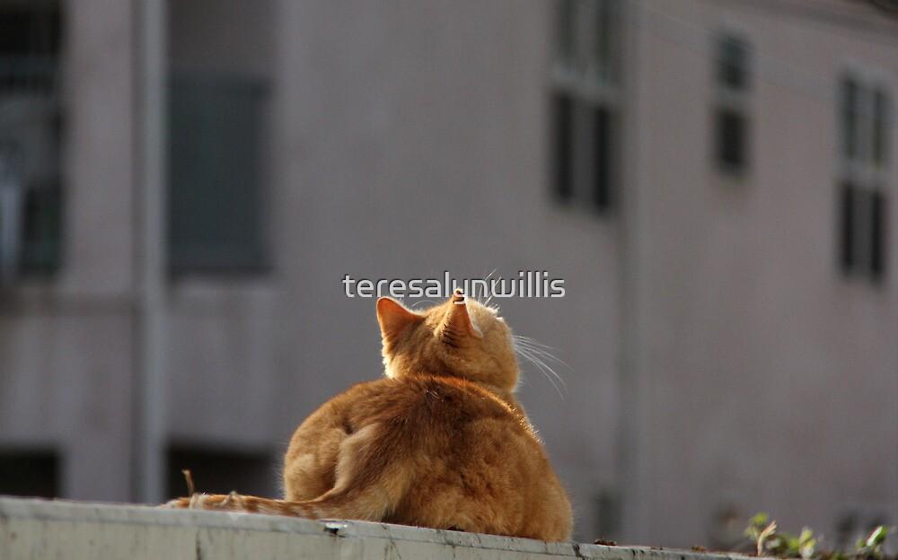 Mum, bird watching. by teresalynwillis