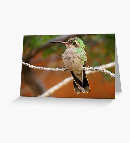 Broad-billed Hummingbird (Female) Greeting Card