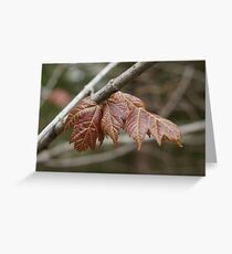 Spring maple Greeting Card