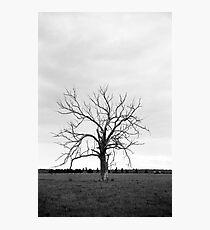 Elder Photographic Print