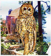 Owl At Lodge Poster