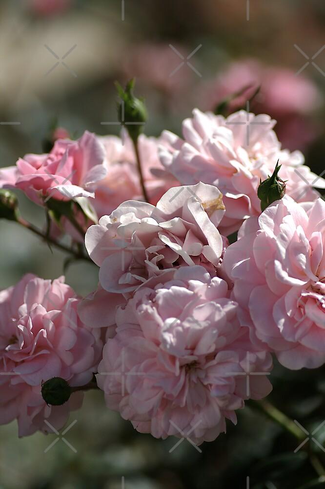 Pink Delight by Joy Watson