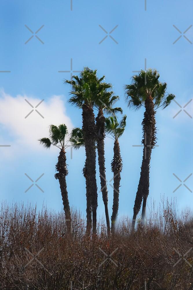 Coronado Palms by Heather Friedman