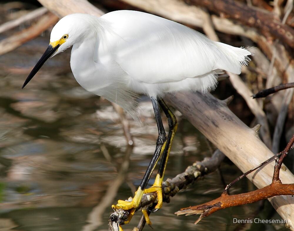 Snowy Egret by Dennis Cheeseman