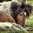 Splendor in the Grass  by Karen Peron