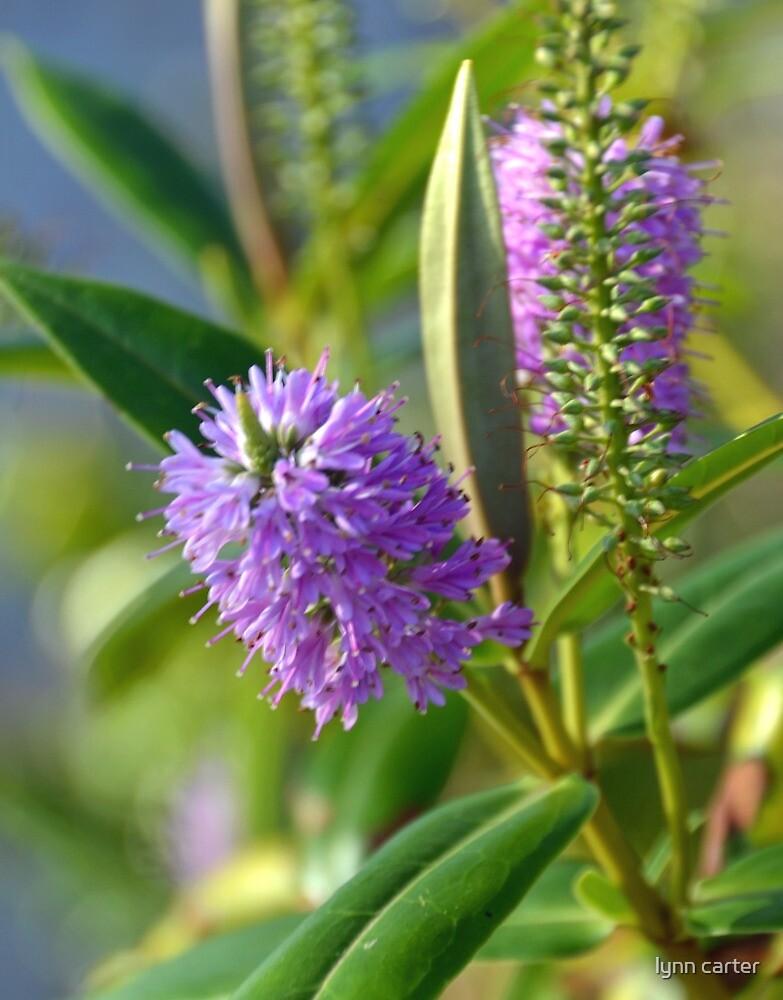 Purple Flowers by lynn carter