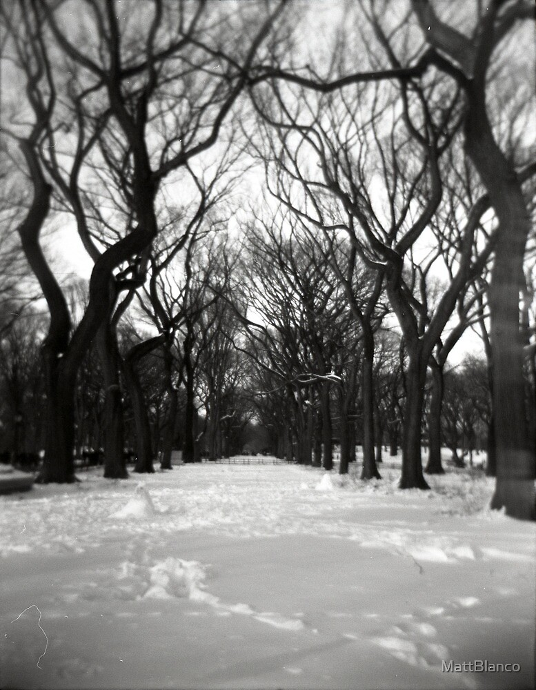 Trees in the Park by MattBlanco