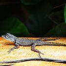 Lizard by Ticker