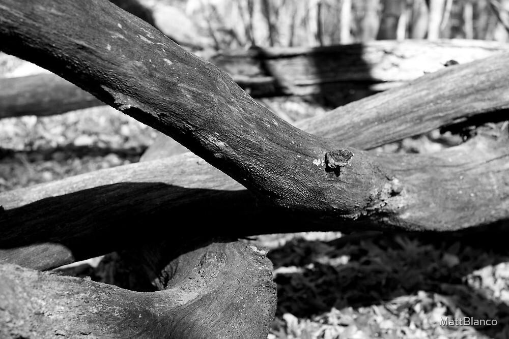 Rotten Logs by MattBlanco