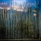 Along the forest road at twilight by Susana Weber