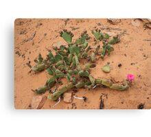 Cactus,Kodachrome State Park,Utah USA Canvas Print