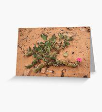 Cactus,Kodachrome State Park,Utah USA Greeting Card