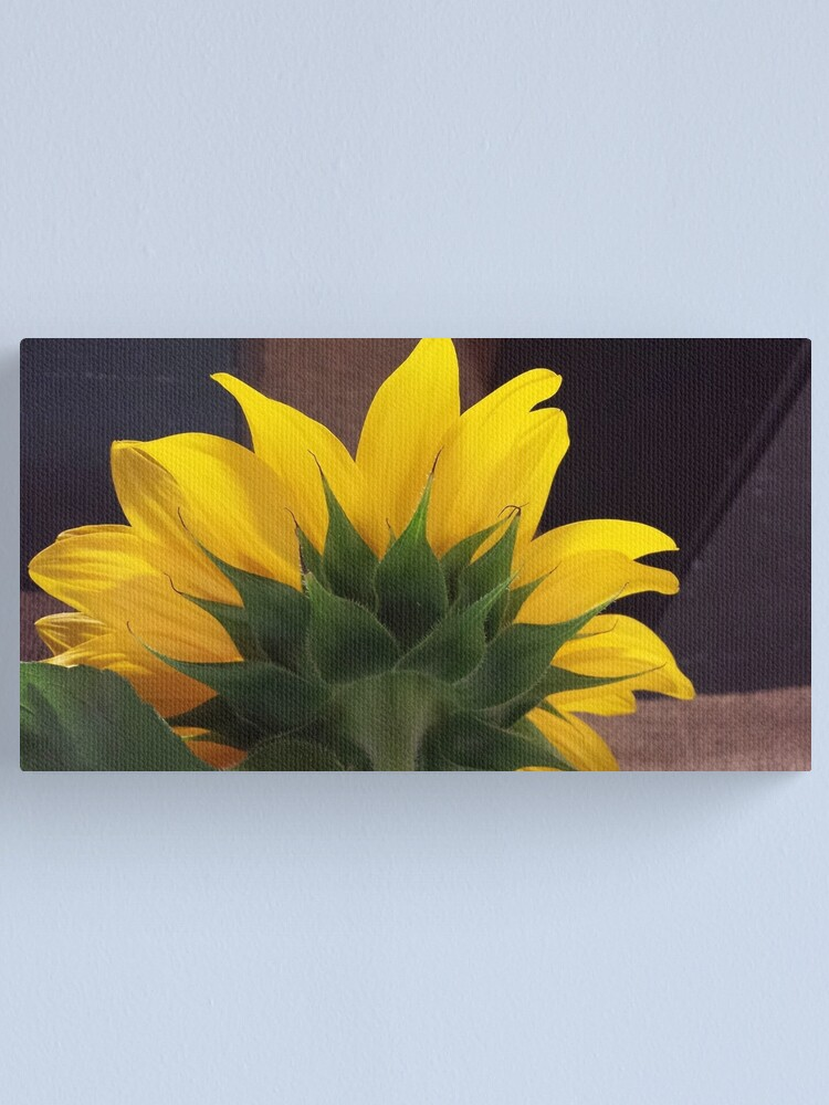 Alternate view of Backside of the Sunflower Canvas Print