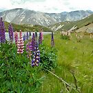 Roadside Lupins by Dilshara Hill