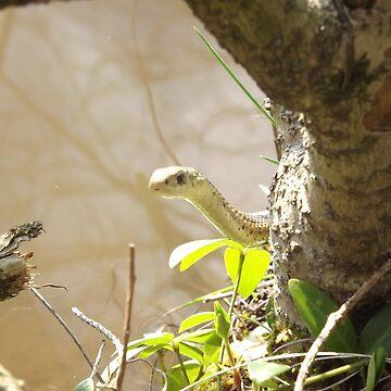 Sneaky Snake by daltval