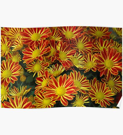 Mums - Red & Yellow Poster