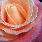 A Rose by Vitta