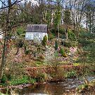 Garden beside the Linhouse Water by Tom Gomez