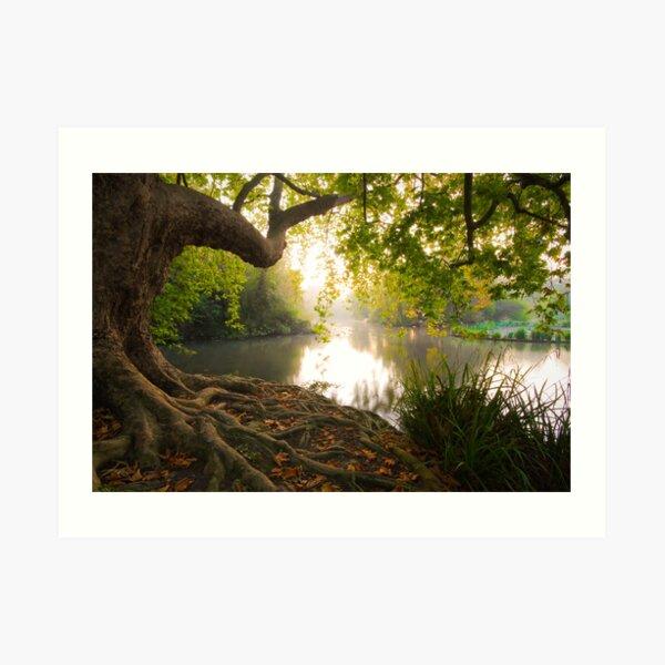 Hampden park pond Art Print