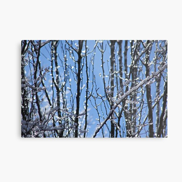 Ice Crystal Forest Metal Print