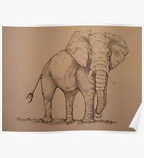 Africana Elephanta, Loxodanta Africana  Poster