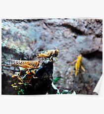 yellow locusts Poster