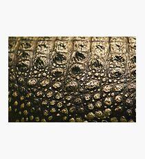 Crocodylus Moreletii Skin Photographic Print