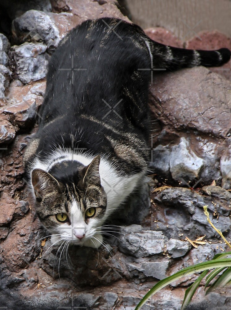 Cat On the Rocks by Heather Friedman
