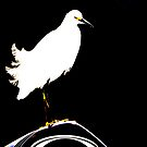 Snowy Egret by imagic